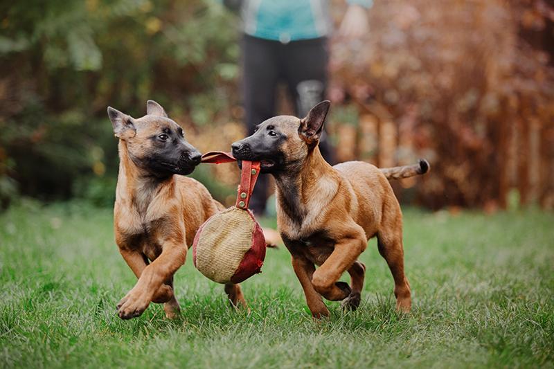 knine perro alto rendimiento